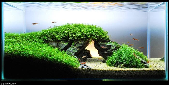 James Findley - How to Create a Planted Tank | Ticketing ...