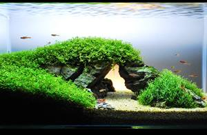 James Findley - How to Create a Planted Tank