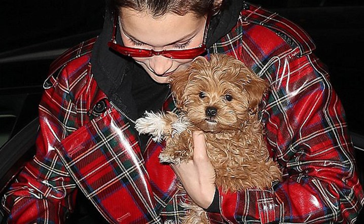 Bella Hadid introduces her new puppy to life with a nude picture!