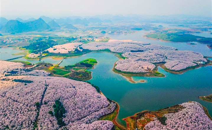 Cherry Blossoms Have Just Bloomed In China, And It's Absolutely Breathtaking!