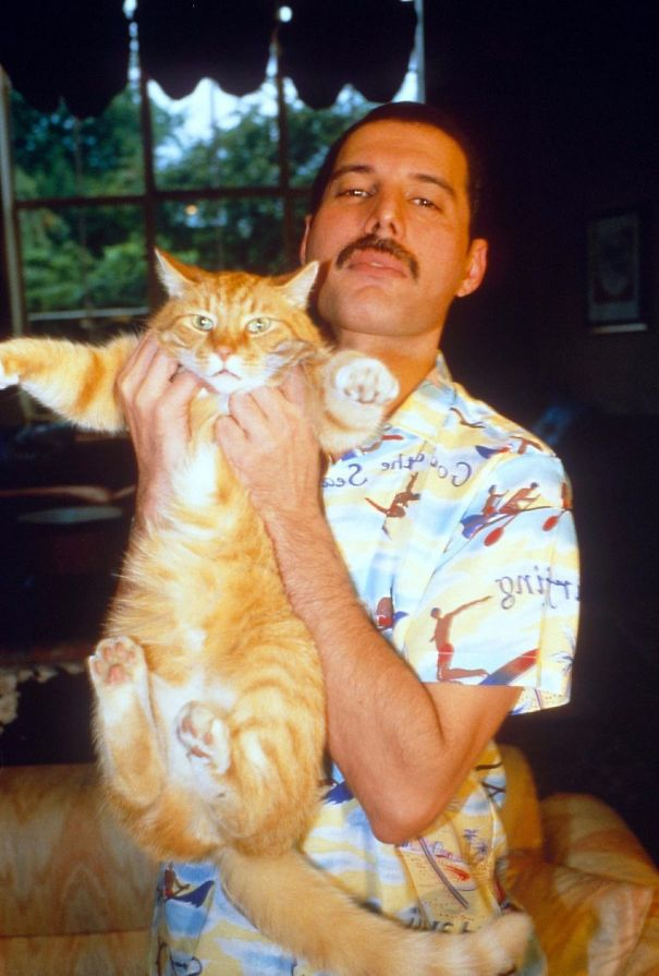Freddie Mercury and His Cats, a Love Story   Ticketing Box